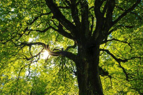 Emergency Tree Work in North Wales
