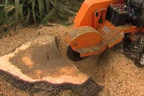 Rhuddlan Stump Grinding