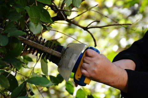 Afonwen Tree Thinning & Pruning Experts