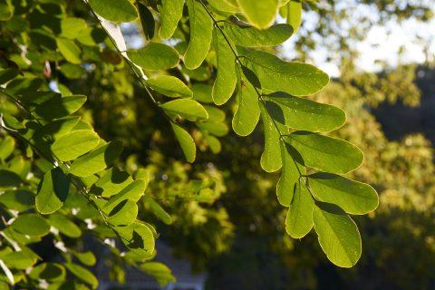 Afonwen Tree Crowning Experts