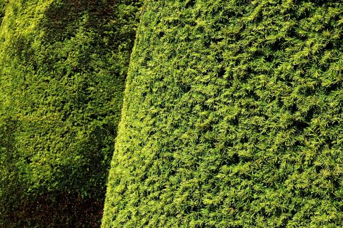 Rhuddlan Hedge Trimming & Removal Experts
