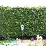 hedge cutting Rhuddlan