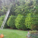 Rhuddlan hedge trimming