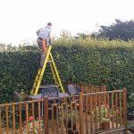 hedge removal Rhuddlan