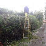 hedge trimming Rhuddlan