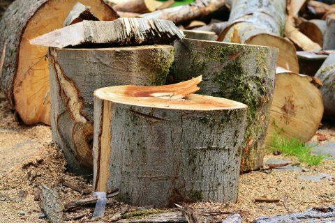 Rhuddlan Stump Removal Experts