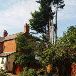 tree pruning Afonwen