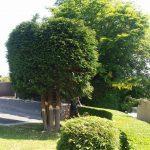 tree thinning expert Afonwen
