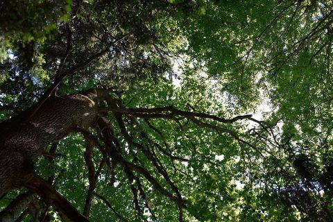 Afonwen Tree Thinning & Pruning