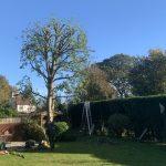 tree crowning reduction Afonwen