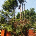 tree crowning Afonwen