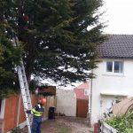cut down tree Penrhyn Bay