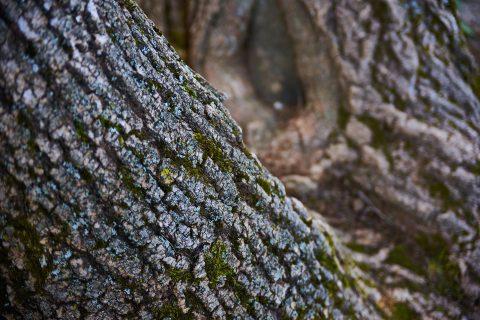 Tree Felling in Penrhyn Bay