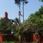 Aldford tree lowering experts