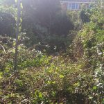 weed removal company Abergele