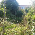 weed removal experts Abergele