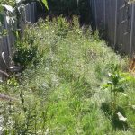 Abergele weed removal experts