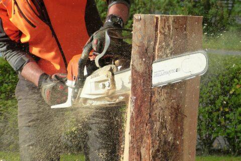 Penrhyn Bay Tree Felling Experts