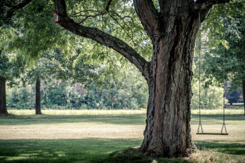 Abergele Experienced Tree Surgeon
